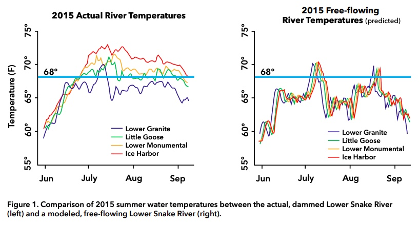 Graphic: Compariston of 2015 summer water temperatures between the actual, dammed Lower Snake River and a modeled, free-flowing Lower Snake River.