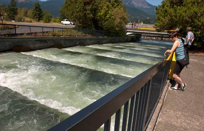 (Mark Gibson photo) In this Aug. 18 file photo, visitors to the Bonneville Dam Visitor Center located on the Oregon shore watch salmon and steelhead migrating upriver over the fish ladder.
