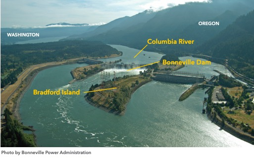 For over 40 years, the U.S. government dumped toxic pollution in and along the Columbia's shorelines at Bradford Island, located within the Bonneville Dam complex in Multnomah County, Oregon.
