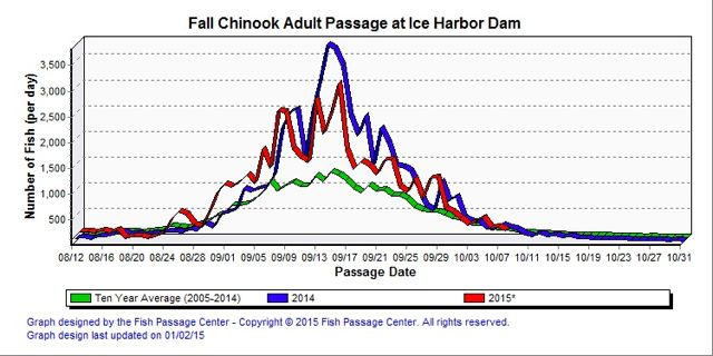Fall Chinook passing Ice Harbor Dam on the Lower Snake River in 2015