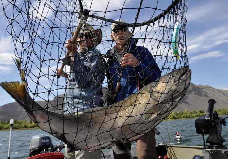 Salmon fishing guide Dave Grove nets a fall chinook for David Moershel of Spokane while fishing on the Columbia River. (Rich Landers photo)