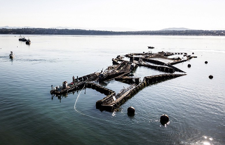Atlantic salmon escaped from this Cooke Aquaculture net pen over the weekend off Cypress Island. This photo was taken Tuesday morning, August 22, 2017. (Beau Garreau / DAKO. 5TUDIOS)