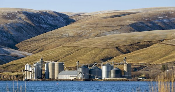 Dam advocates say breaching the Snake's dams would lead to higher shipping prices that would cut profits of wheat growers by half or more, forcing many farming families out of business. (Mike Siegel / The Seattle Times)