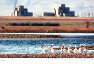 The Hanford Reach National Monument: Nuclear weapons production helped preserve the lone stretch of Columbia River above Bonneville Dam that hasn't been turned into a reservoir.  (Joshua Trujillo/seattlepi.com file photo)