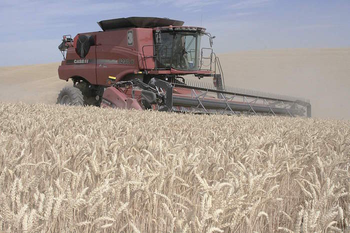 A combine harvests winter wheat near Walla Walla, Wash., on July 10.  Weather problems in the Upper Midwest, Canada and Australia have led to an increase in wheat prices.
