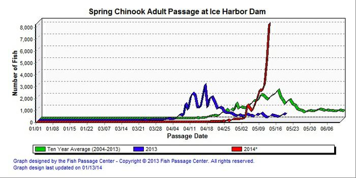 Graphic: Spring chinook counts over Ice Harbor Dam as of May 8, 2014. (Fish Passage Center)