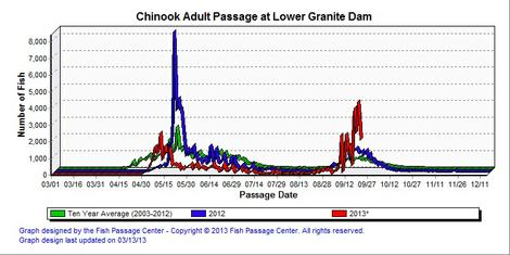 Graphic: Lower Granite fish counts of adult Chinook salmon.  Cooler water temperatures have made to erase the thermal barrier at Lower Granite Dam up the Snake River.