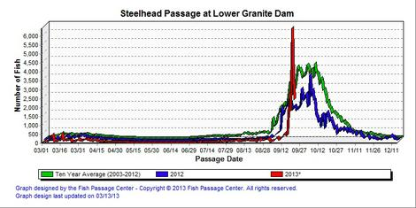 Graphic: Lower Granite counts of adult steelhead.  Cooler water temperatures have made to erase the thermal barrier at Lower Granite Dam up the Snake River.