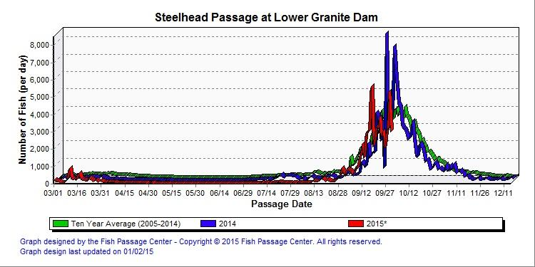 Graphic: Steelhead counts over Lower Granite Dam 2015 compared to ten-year average.