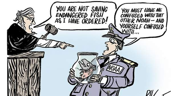 (Cartoon by Rik Dalvit) Judge says: 'You are not saving endangered fish as I ordered.; NOAA: 'You must have me confused with the other Noah.