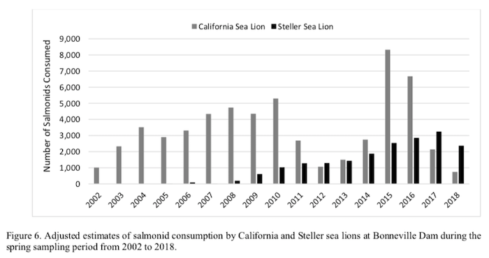 Graphic: Adjusted Estimate of salmonid consumed by California and Stellar sea lions at Bonneville Dam, from Jan 1. to June 2, 2002-2018