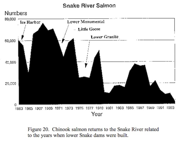 In retrospect, the number of returning adult salmon was relatively level from 1938 through 1990.  The precipitous loss of returning chinook entering the Snake River (Figure 20) accounts for a major share of the decline that has occurred in total return to the Columbia -- Artificial Production Review, NW Power & Conservation Council