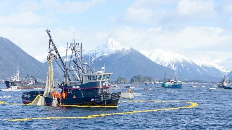 In southeast Alaska, all chinook salmon fisheries have been shut down due to low stocks.   (Photograph by JuneauTek)