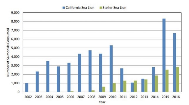 Sea Lion Consumption of salmon detected from 2002 to 2016 is on the rise