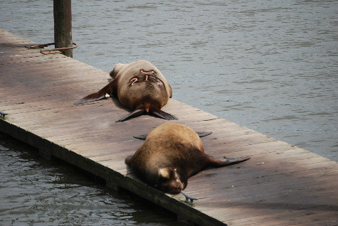 Federal bill targets scapegoated sea lions at the Bonneville Dam.