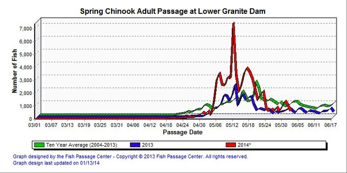 Lower Granite Dam spring chinook counts posted June 3, 2013. (Fish Passage Center)