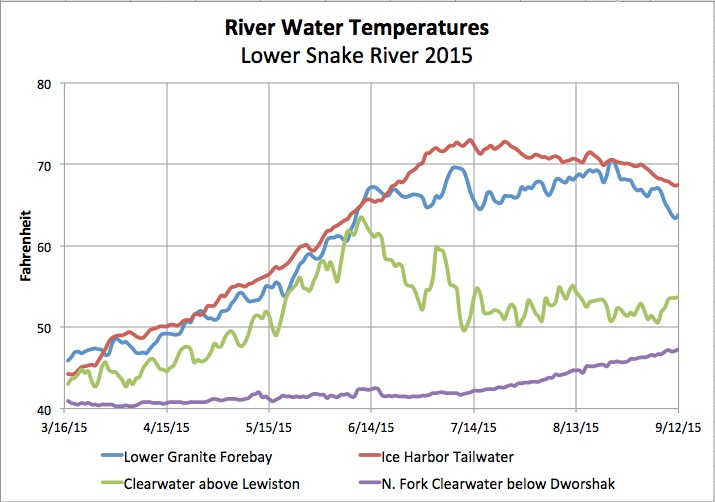 Graphic: Lower Snake River water temperature in 2015 upstream of Lewiston, at Lower Granite forebay and Ice Harbor tailrace.  Source data: US Army Corps of Engineers Dataquery 2.0