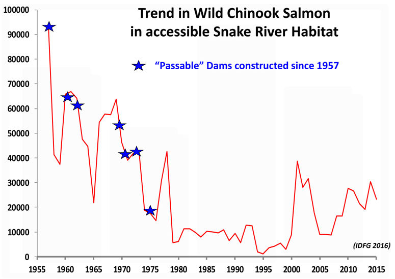 Trend in Wild Chinook Salmon in accessible Snake River habitat and