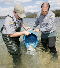 (Photo David Seelig) Idaho Department of Fish and Game fisheries biologists Dan Baker and Mike Peterson release one of 500 sockeye salmon to Redfish Lake Thursday, Sept. 6