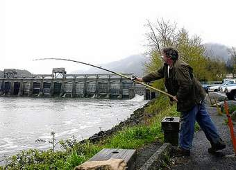 An angler casts for salmon downstream from Bonneville Dam in this 2001 photo. Officials say it's still too early to tell how the Columbia River spring chinook run will turn out. (AP Photo)