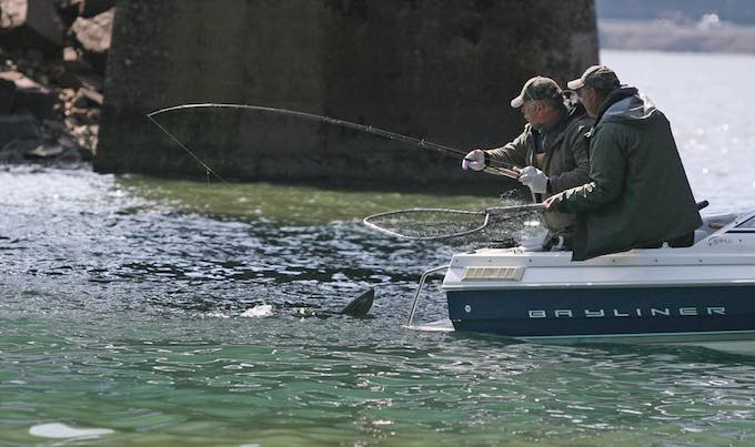 Boat anglers land a spring chinook. (Hal Bernton photo)