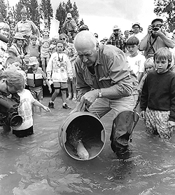 Idaho's Governor Cecil Andrus releases adult Sockeye into Redfish Lake, Idaho in 1994.  This was the first such adult release and which was forced upon the federal government by the Shoshone-Bannock