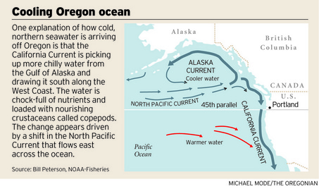 Cooling Pacific NW graphic by Michael Mode, source: Bill Peterson, NOAA Fisheries