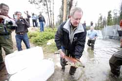 (David N. Seelig) U.S. Sen. Mike Crapo, R-Idaho, releases a spawning sockeye salmon into Redfish Lake Creek, Idaho