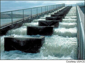 (ACOE) Fish ladder at Ice Harbor dam