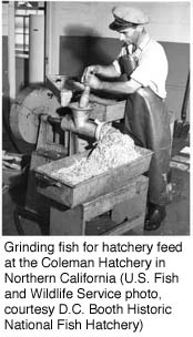 Grinding fish for hatchery feed at the Coleman Hatchery in Northern California (U.S. Fish and Wildlife Service, courtesy D.C. Booth Historic National Fish Hatchery)
