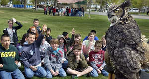 A great horned owl named Alberta swivels its head Tuesday as students in Audrey Hickman's fifth-grade class at Lincoln Elementary School in Kennewick take turns answering questions by Pam Wolff of the West Valley Outdoor Learning Center in Spokane. The presentation was one of several dozen at the two-day Salmon Summit 2011 being held in Columbia Park.