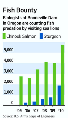Graphic: Estimate of fish predation by sea lions visiting Bonneville Dam