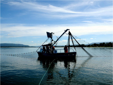 Purse seine for salmon, the future meets the past on the lower Columbia. (WDFW photo)