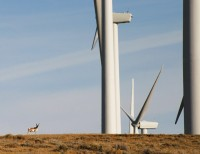 (Johnathan Thompson) Pronghorn and wind turbines near Medicine Bow, Wyoming.
