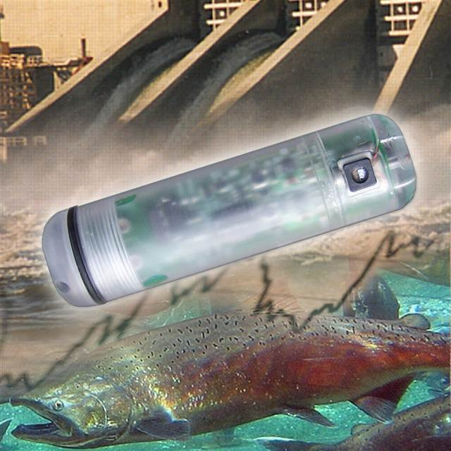 A sensor fish is sent through turbines to measure the pressure conditions inside. (PNNL photo)