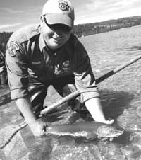 An endangered sockeye salmon is released into Redfish Lake south of Stanley.