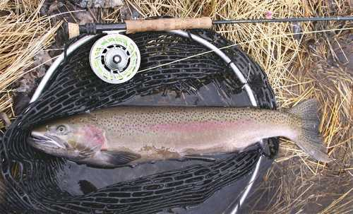 Steelhead make for fine fishing.