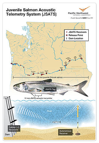 The Juvenile Salmon Acoustic Telemetry System (JSATS) helps determine the survival rate of juvenile salmon in the Columbia River estuary by tracking fish as they migrate to the ocean. Just 0.43 grams and smaller than a pencil eraser, JSATS tags are the smallest acoustic tags available. (PNNL)