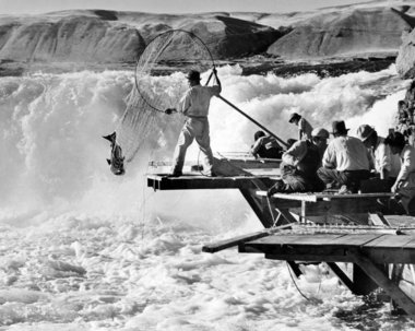 (Ray Atkeson) Native American fishermen harvest salmon in 1937 at Celilo Falls. Click Image for full size image.